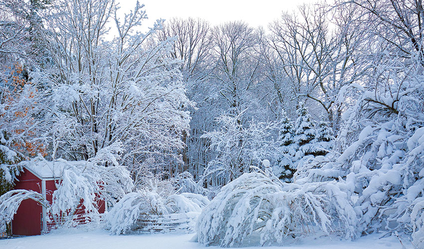 trees in Northeast Ohio damaged by snow and ice