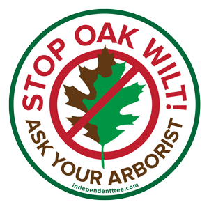 Stop Oak Wilt in NE Ohio - logo