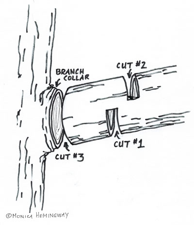 diagram of the 3-cut pruning method