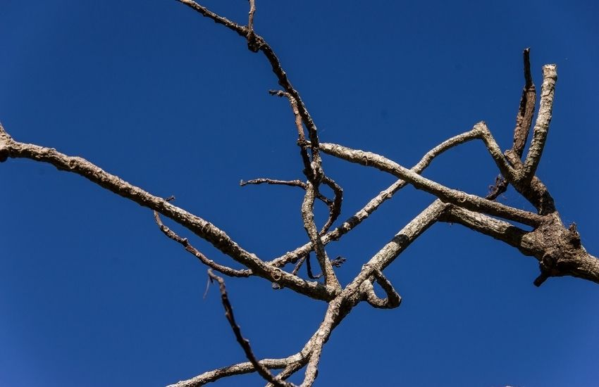 dead tree branches against a blue sky
